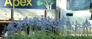 Apex Tree & Garden Experts